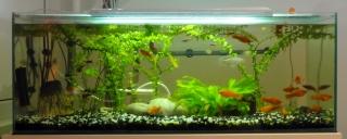 pohled do akvária 110728