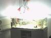 pohled infrakamerou do akvária - VIS