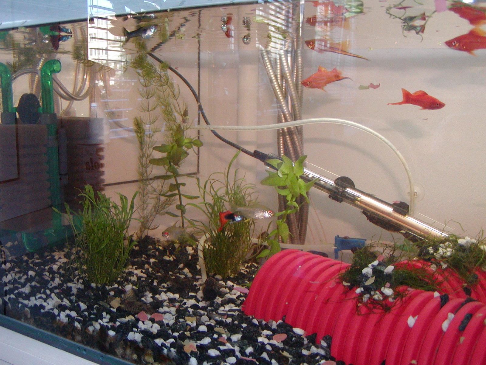 levá část akvária