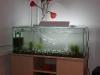 nově napuštěné akvárium